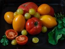 Разнообразия и зеленые цвета томата Стоковая Фотография RF