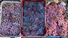 Разнообразия красной виноградины Стоковое фото RF