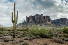 Разнообразная красота ландшафта пустыни Аризоны Стоковое Фото