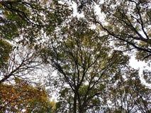 Разнообразная сень Стоковые Фото