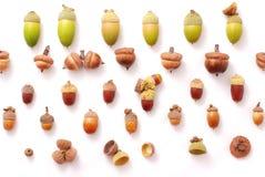 разнообразность собрания жолудей Стоковая Фотография RF