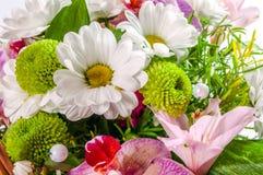 Разнообразный букет цветков изолировано Стоковое фото RF