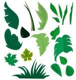 Разные виды заводов и трав Стоковые Изображения RF