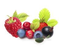 Разный вид изолированных плодоовощей ягоды Стоковые Фото