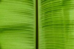 Разрешение банана Стоковые Фото