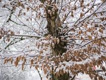 Разрешение дерева зимы, сезон Австрия снега Стоковое Изображение RF