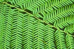 разрешение зеленого цвета папоротника Стоковые Изображения
