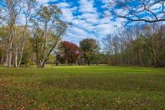 разрешение зеленого цвета поля состава высокое панорамное Стоковое Фото