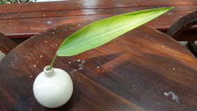 Разрешение зеленого цвета ogf тени в белой вазе стоковое фото rf