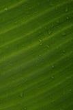 разрешение капельки банана Стоковые Фото