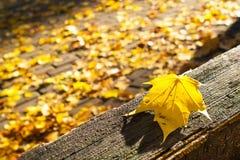 Разрешение клена осени лежа на деревянном banch Стоковое Изображение RF