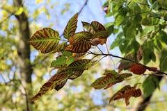 Разрешение красного цвета и зеленого цвета Стоковое Фото