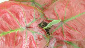 Разрешение крыла Анджела в саде Стоковое фото RF