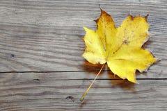 Разрешение клена осени на деревянной доске Стоковое Фото