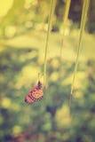 Разрешение окуня бабочки кокосовой пальмы Стоковое фото RF