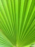 Разрешение пальмы стоковая фотография