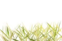 разрешение предпосылки bamboo Стоковое фото RF