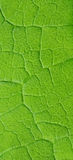 разрешение предпосылки флористическое естественное Стоковое фото RF