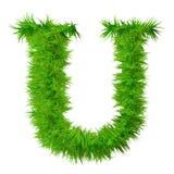 разрешение травы купели высокое изолированное Стоковые Изображения RF
