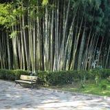 разрешение jpg bamboo рощи высокое Стоковые Изображения RF