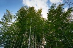 разрешение jpg bamboo рощи высокое Стоковое Изображение RF