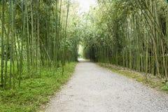разрешение jpg bamboo рощи высокое Стоковое Фото