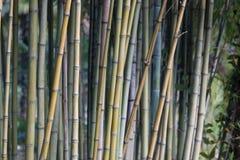 разрешение jpg bamboo рощи высокое Стоковая Фотография RF