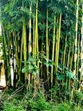 разрешение jpg bamboo рощи высокое Стоковое фото RF