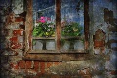 Разрушанное Windows, свежие цветки Стоковые Фотографии RF