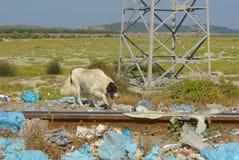 Разрушать нашу планету стоковые фотографии rf