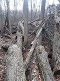 Разрушение дерева стоковое фото rf