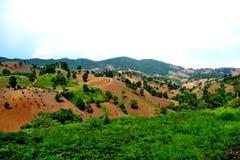 Разрушение дождевого леса Стоковое фото RF