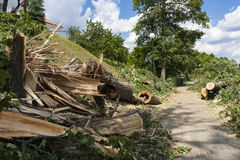 Разрушение на пути велосипеда после ветров урагана Стоковая Фотография