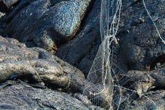 Разрушенная загородка Стоковое Фото