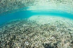 Разрушенный коралловый риф Стоковое Изображение