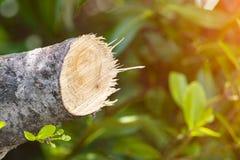 Разрушьте джунгли, журналы извлеченные от устойчивого леса под s стоковое изображение rf