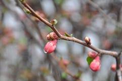 Разрывы весны Стоковая Фотография