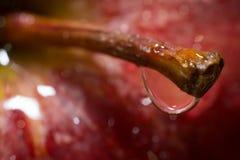 Разрывы Яблока Стоковые Фото