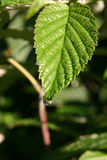 разрыв листьев Стоковое Изображение