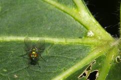 разлейте зеленый цвет по бутылкам мухы Стоковое Изображение