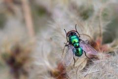 разлейте зеленый цвет по бутылкам мухы Стоковая Фотография
