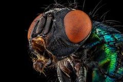 разлейте общий зеленый цвет по бутылкам мухы Стоковое Изображение