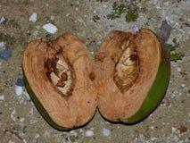 Разделение кокоса Стоковые Изображения