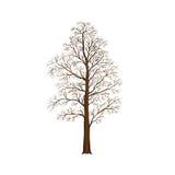 Разделенное дерево без листьев, иллюстраций иллюстрация штока