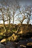 Разделенное дерево Стоковая Фотография RF