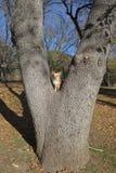 Разделенное дерево Стоковые Изображения RF