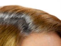 Разделенные серые волосы. стоковое фото rf