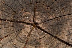 Раздел текстуры ствола дерева Стоковое Фото