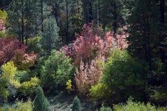 Различная осень Стоковая Фотография RF