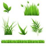 Различная трава и листья изолированные на белой предпосылке Стоковая Фотография